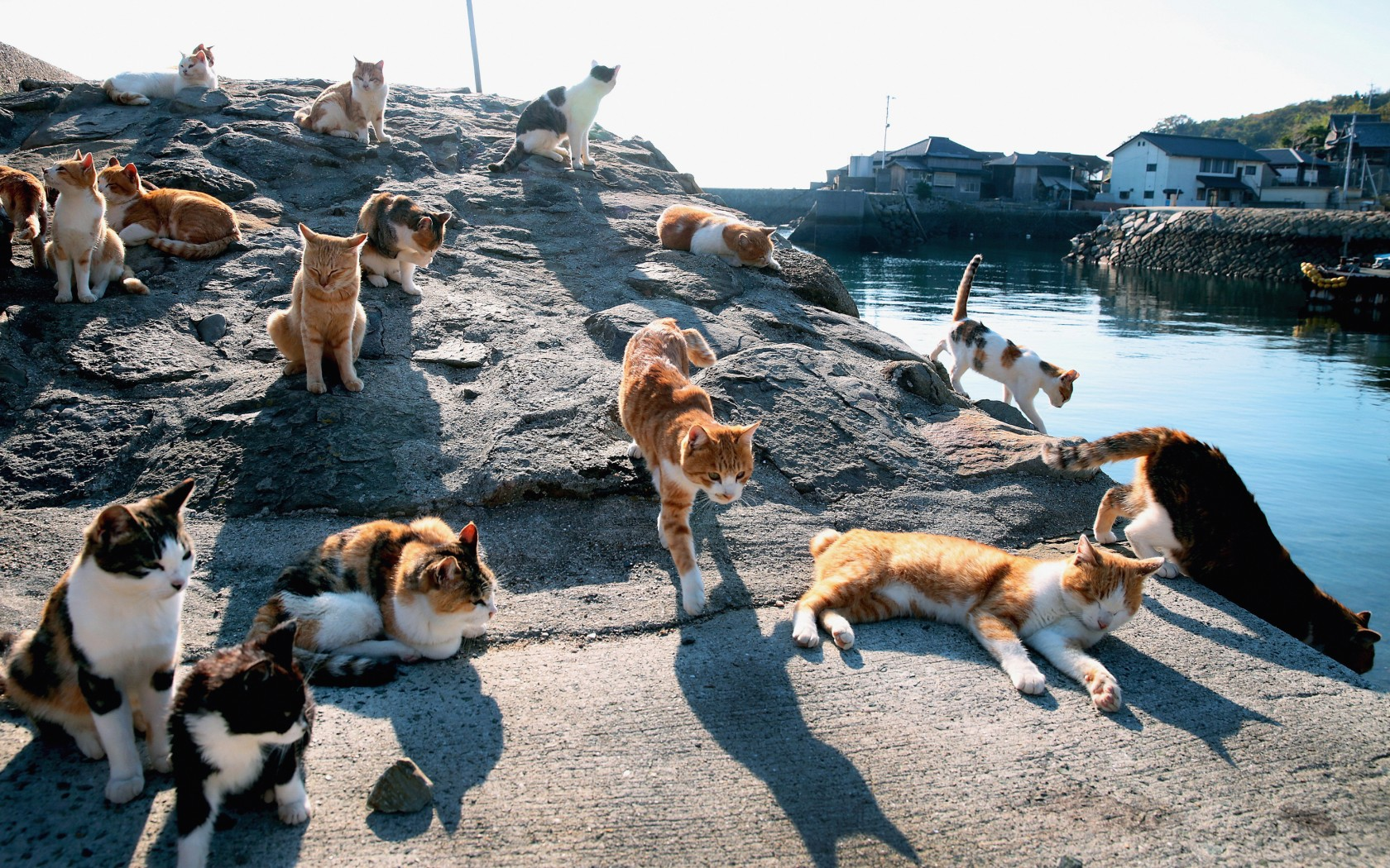 Animals Cat Island
