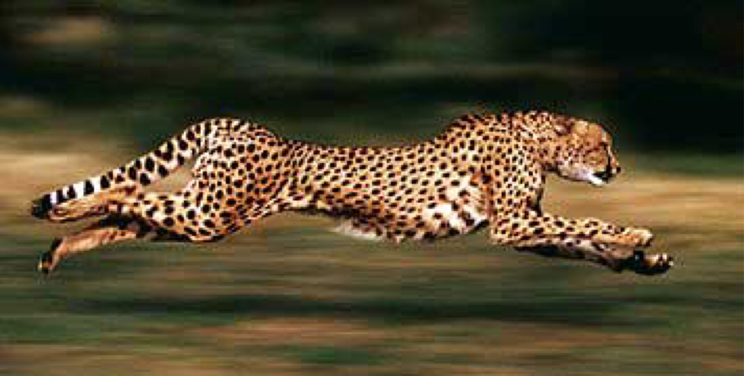 7 Of The Fastest Land Dwelling Animals On Earth